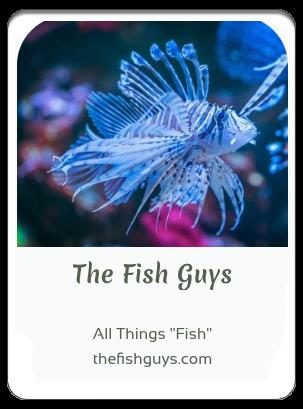 411LTD index the fish guys